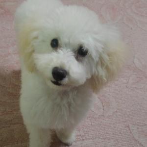 まーねーちゃんの犬日記