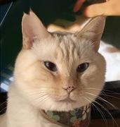 かぼちゃのカーテンの下で猫とエコ生活