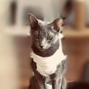 《佇む猫》---それでも猫と暮らす