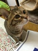 yoshimikeの日記