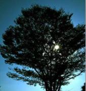 深い森と月とヒーリング