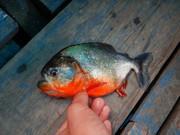 魚追っかけて旅してます。