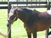 ルドルフの名馬予想と馬名鑑