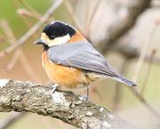ゆるゆる野鳥観察日記