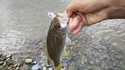 海で河川で渓流で 沖縄Fishing