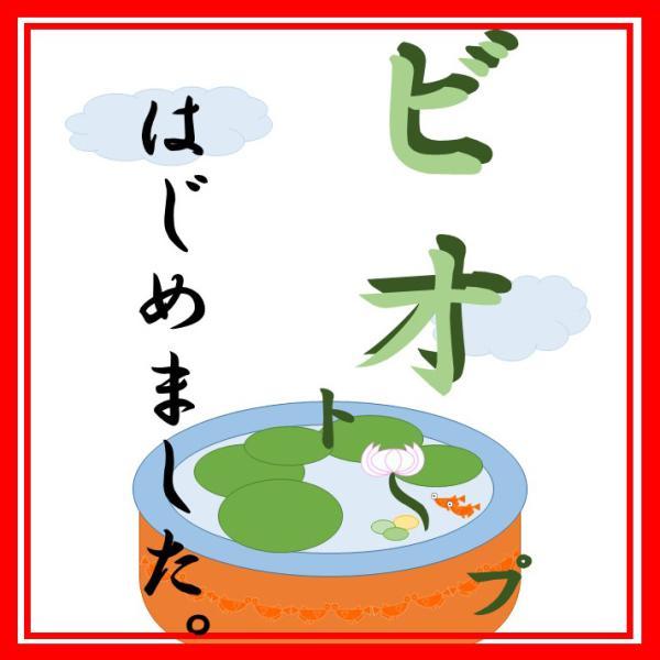 ビオトープはじめました徳島さん!!