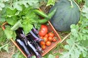 ど素人の家庭菜園ブログ