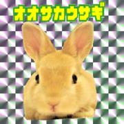 大阪うさぎと行政書士のブログ