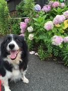 たんぽぽドッグスクールの日々~犬と私のあれこれ~