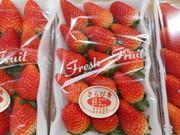 果物の宅配、通販、観光 | 笹原果実 | 静岡県磐田市