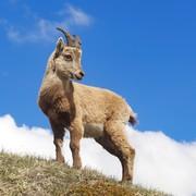 羊の皮を被った山羊の日記