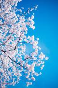 yo-shiの自由ブログ