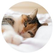 三毛猫ミミさんのプロフィール