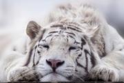 虎親爺の愚見ブログ