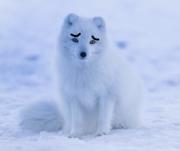 ペトナビ~初心者からのペットの飼い方ナビ