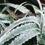 植物を育てると365日が楽しくなるブログ