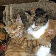 猫背ってます!〜錦鯉猫とイカメシ猫、時々空から猫