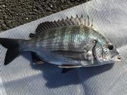 sugwiの釣行記