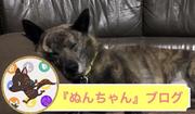 甲斐犬『ぬんちゃん』ブログ
