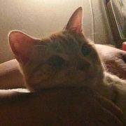 「猫のコタジ」と僕~ネコとの暮らしで見えるモノ