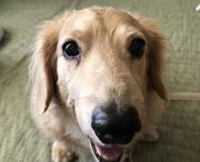 シニア犬との暮らし方