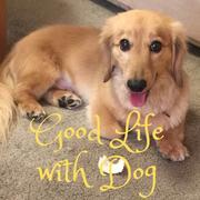 犬と幸せに暮らすために