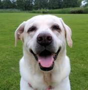 dogcare-smileさんのプロフィール