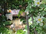 ばぁばの薔薇の花園