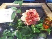 花のある生活〜フラワーサークルリリー〜