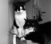 ラジエーション猫の徒然記