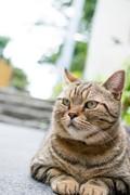 シュレーディンガーの猫