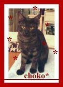 七海ひろき様〜7つの海におぼれた猫さんのブログ