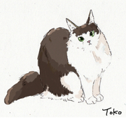 tokoさんのプロフィール