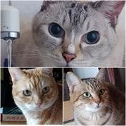 我が家の猫チャンズ