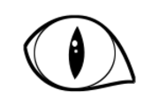 猫の目さんのプロフィール