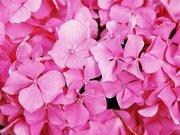 紫陽花さんのプロフィール