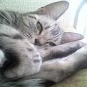 猫仙人の自由気ままなブログ