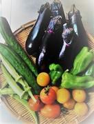 なんちゃって菜園の野菜な時間