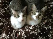 ネコさんブログ☆ミルクとショコラの日記