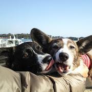 夫と妻と犬2匹。2nd。