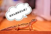 爬虫類初心者の飼育日誌