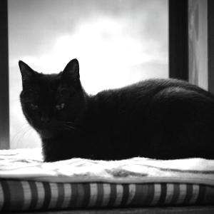 鈴猫のblog