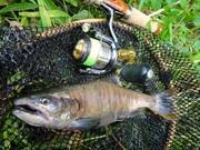 静岡の疑似餌釣行記