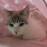 肺がんの夫を支えた妻と猫~二人で桜、見れたね