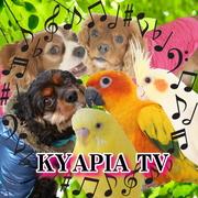 KYAPIA TVさんのプロフィール