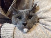 アーリーリタイアの日常☆猫と一緒にのんびり生活