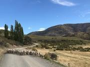 べっさんのニュージーランド自転車旅行記