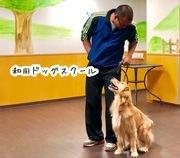 和田ドッグスクールさんのプロフィール