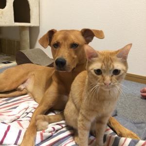 元保護犬と元保護猫の田舎暮らしブログ