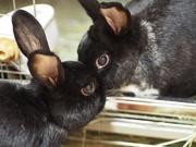 ウサギデザイン